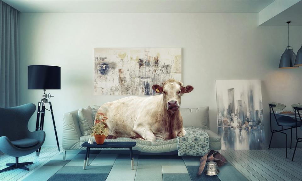 leather sofas Bristol