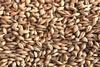 Crushed Grain - Lager Malt 500g