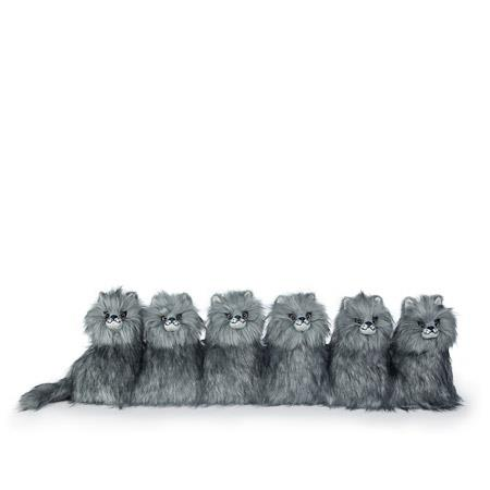 Draught Excluder - POSH' MAJESTIC MAINE COON KITTENS